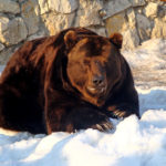 The Russian Bear on The Moral Crisis of Western Nations
